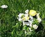 flowers for baby grave garden of remembrance BUCKET FULL POSES lemon